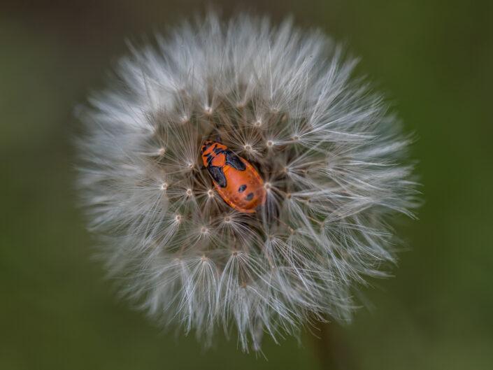 Bedded bug